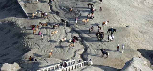 Kuda dibawah kawah Gunung Bromo