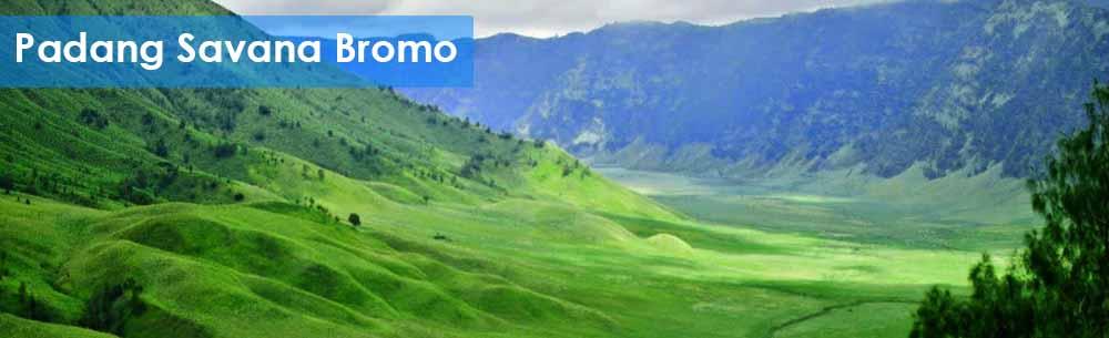 paket wisata padang savana Bromo